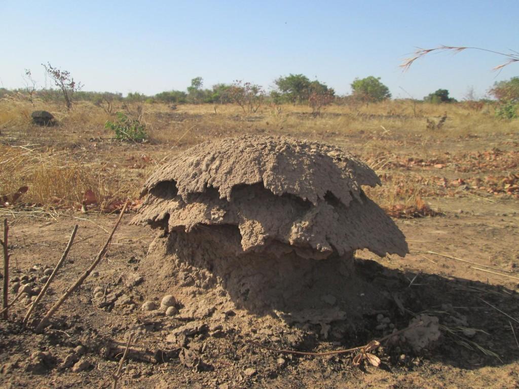 La termitière sur le bord de la route